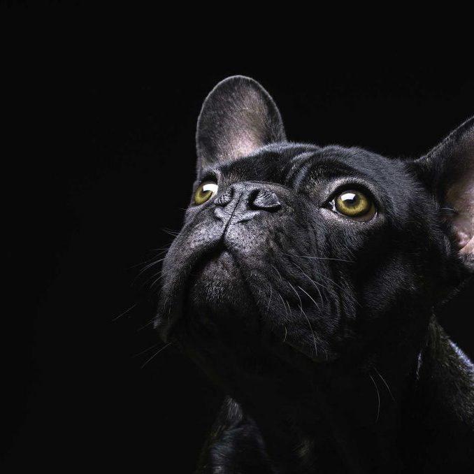 mira-el-perro